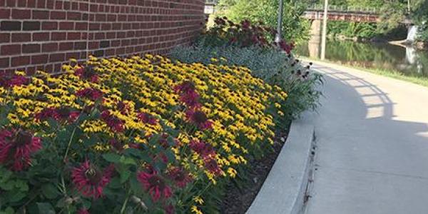 Pollinators garden at IMU