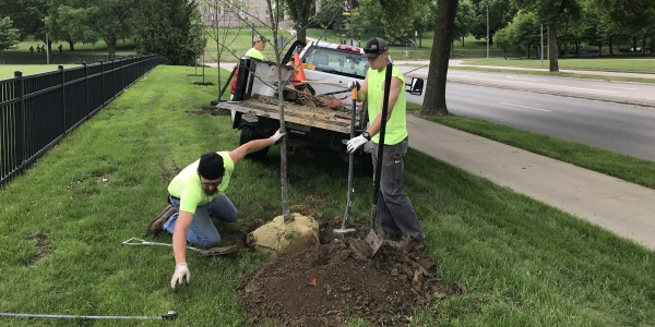 Landscape Services planting a new tree on Iowa Ave