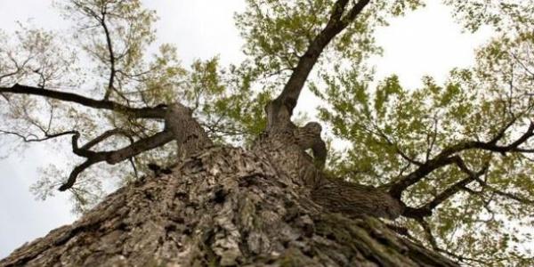 Tree Inventory App