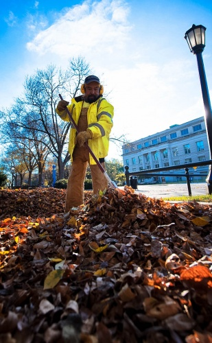 Raking leaves on the pentacrest